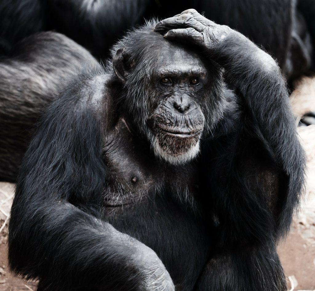 обезьяна думает над бесплатной консультацией по налогам