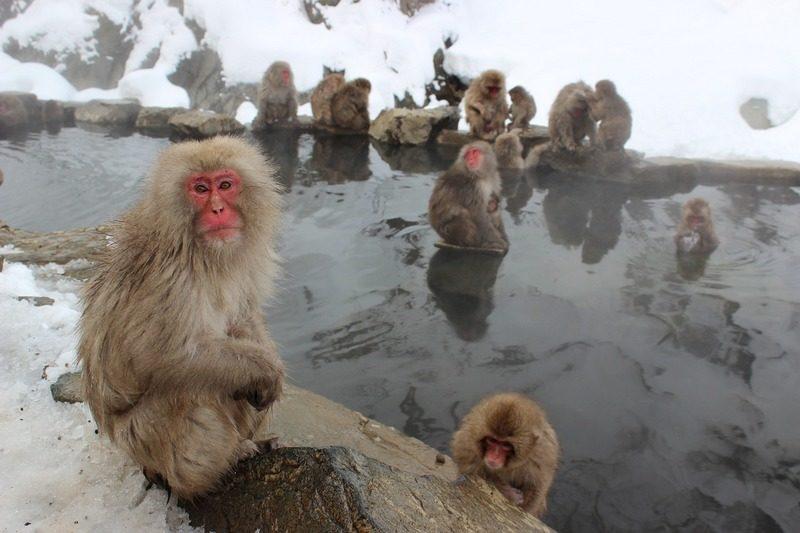 обезьяны - близкие родственники людей