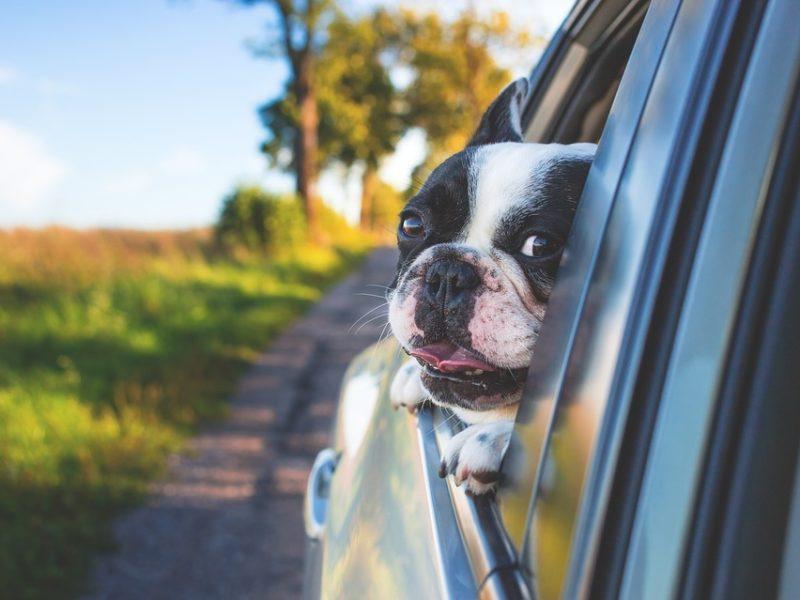 доверенность на автомобиль у собаки