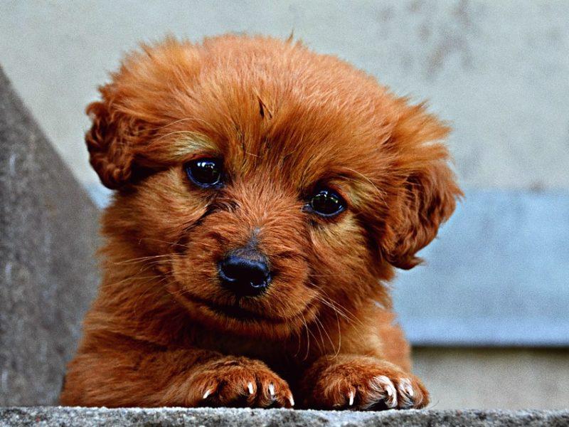 налоги на собак